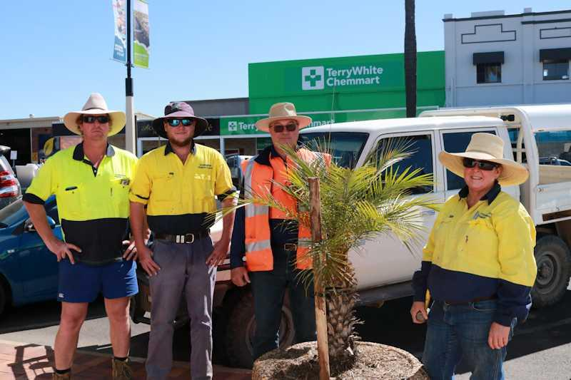 council workers around restored palm tree that was vandalised and the act was caught on CCTV in marshall street goondiwindi
