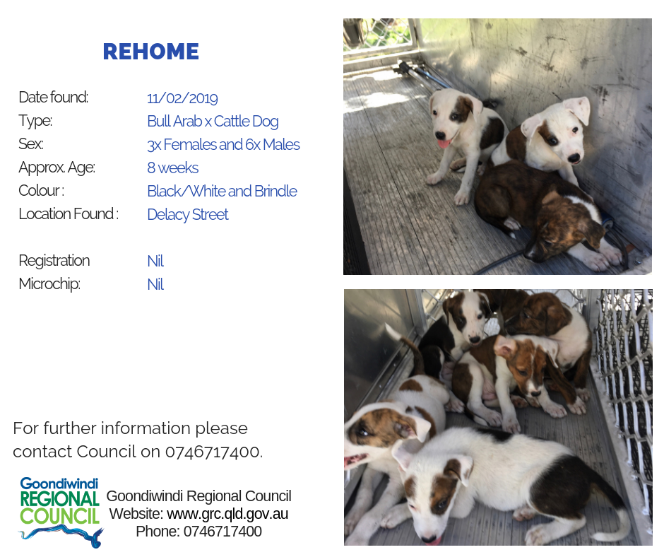 rehome dogs impounded